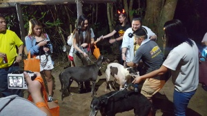 Tourist walking with the greyhounds at Zoobic Night Safari.